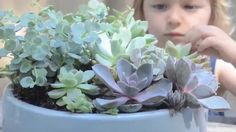 Succulents: A Love Story | Sunset