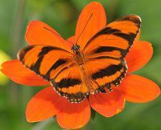 Beuatuful butterfly - butterflies Photo
