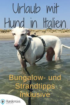 Urlaub Hund Italien – Bungalow + Strand hundefreundlich Holiday with dog in Italy. Sun, sand, pizza and sea. Tip for accommodation and beach. Dog Travel, Cruise Travel, Train Travel, Capitol Reef National Park, Grand Canyon National Park, Yorkie, Italy Train, German Dog Breeds, Dog Beach