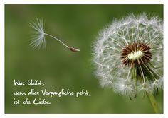Die Liebe bleibt für immer   Trauer & Abschied   Echte Postkarten online versenden   MyPostcard.com Blowing Dandelion, Smiley Emoji, Child Loss, Still Standing, In Loving Memory, Royalty Free Images, Clip Art, Magazine, Vectors