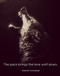 """Always travel with a pack. That's werewolf 101. That and it's apparently impolite to pet other wolves... It's hard when they're so freaking cute."""