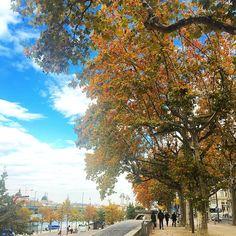 """#Repos à #midi à côté de La #Rhône ⛅️ #autumn #fall #france #lyon #monlyon #onlylyon #quai #river #relax"""