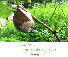 ... #comfort unfolds during your #being ...! ( #Samara )