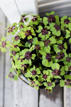 Puutarhan mustat ruukkukasvit | KUKKALA Flowers, Gardens, Outdoor Gardens, Royal Icing Flowers, Flower, Florals, Garden, House Gardens, Floral