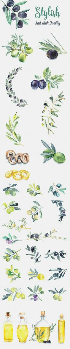 Drawing On Creativity Olive Watercolor Paintings by Emine Gayiran on Creative Market Botanical Art, Botanical Illustration, Watercolor Illustration, Watercolour Painting, Watercolor Flowers, Painting & Drawing, Watercolors, Chiaroscuro, Paint Designs