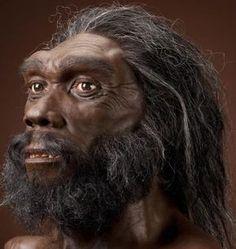 HOMO HEIDELBERGENSIS: Entre Homo antecessor, una especie poco conocida basada en fósiles de las colinas de Atapuerca, en España, y los linajes Sapiens y Neanderthalensis existió una especie con fósiles en Europa desde hace medio millón de años, y en África un poco más tempranamente, que presenta carácteres intermedios entre H. Erectus / Ergaster y H. Sapiens.