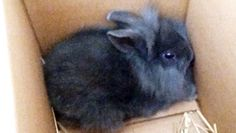 Please SIgn: Rabbit Killed on Air by Radio Host Deserves Justice