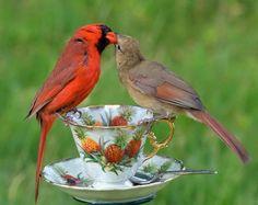 Beautiful bird feeder...cardinals.