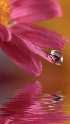 Flowers with Water Drops Wallpaper Flor Iphone Wallpaper, Flower Wallpaper, Mobile Wallpaper, Water Drop Photography, Photography Flowers, Levitation Photography, Exposure Photography, Abstract Photography, Beach Photography
