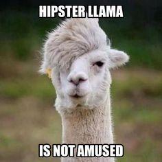 Llama Meme | Generate a meme using Hipster Llama