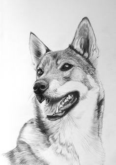 Tamaskan dog pencil art drawing of a pet www.pet-art.co.uk Dog Pencil Drawing, Cute Dog Drawing, Pencil Drawings Of Animals, Tamaskan Dog, Color Pencil Sketch, Carlo Rivera, Dog Coloring Page, Drawing Things, Pet Art
