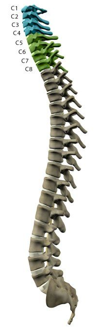 Levels of Injury - Understanding Spinal Cord Injury