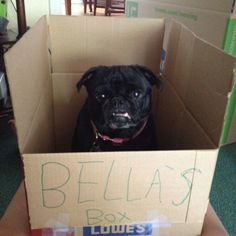 Bella's moving box