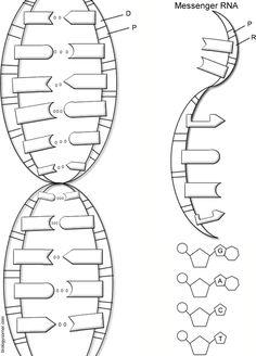 recombinant dna technology worksheet biology worksheet posters infographics pinterest. Black Bedroom Furniture Sets. Home Design Ideas