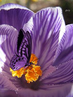 Gif Paradise Angel Wallpaper, Butterfly Wallpaper, Flowers Gif, Blue Flowers, Gifs, Beautiful Butterflies, Beautiful Flowers, Art Papillon, Beau Gif