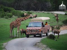 Fossil Rim Wildlife Center (Glenrose, TX) ...Family tour $32-$38 per person (doesn't look like there is a discount for very young children)
