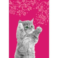 Ręcznik kuchenny Kitten Big Hug