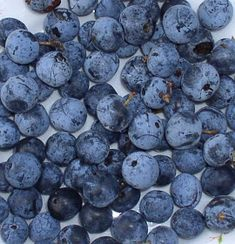 Erdőkóstoló: Kökénylekvár és kökényes receptek Marmalade, Blueberry, Fruit, Cukor, Automata, Food, Berry, Essen, Meals