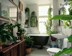 houseplants in the bathroom