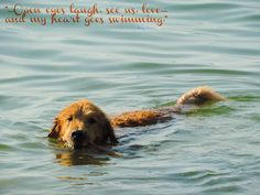 """""""...Open eyes laugh. See us. Love...And my heart goes swimming."""" - Roma Potiki  [© 2014 — with Tuesday at Traverse City - Lake Michigan]"""