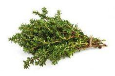 Timo: la pianta che distrugge i virus, cura il mal di stomaco e allevia lo stress Superfood, Green Colors, The Cure, Flora, Spices, About Me Blog, Health, Stress, Medicine