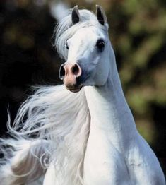 world's most beautiful horses | The Most Beautiful Horse World