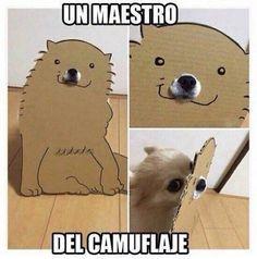 Imágenes De Risa Para Compartir #memes #chistes #chistesmalos #imagenesgraciosas #humor Funny Spanish Memes, Spanish Humor, Animals And Pets, Funny Animals, Cute Animals, Funny Images, Funny Pictures, Humor Grafico, South Park