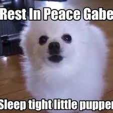 MY LOVE IS DEAD Sleep Tight, Rest In Peace, Passed Away, Sad, King, Puppies, My Love, Dogs, Puppys