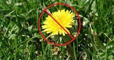 """Plivirea grădinii nu este cea mai plăcută ocupație. Dar chiar și acest lucru plicticos poate fi făcut cu succes dacă găsești o soluție optimă. Există circa 10 moduri de a scăpa de buruieni în grădină. Aceste idei vor fi o mare ușurare pentru grădinari și vor proteja plantele de """"oaspeți"""" nedoriți. 1.Arat fără răsturnarea brazdei Lupta contra buruienilor trebuie să înceapă încă de la etapa pregătirii solului pentru plantare. Adepții agriculturii organice astăzi practică pe larg aratul fără… Wreaths, Christmas Ornaments, Holiday Decor, Garden, Sun, Plant, Garten, Christmas Jewelry, Gardens"""