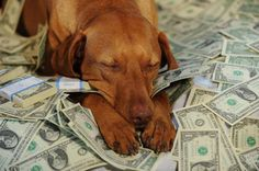 Has your dog ever eaten your money? What Dogs, All Dogs, Fluffy Animals, Cute Animals, Animal Humour, Pet Supplements, Dog Facts, Dog Eating, Dog Chews