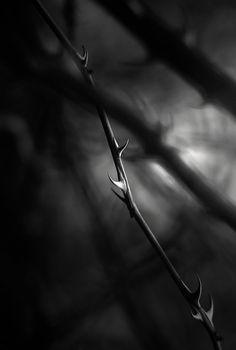 ☾ Midnight Dreams ☽ dreamy dramatic black and white photography - artizan3.tumblr.com