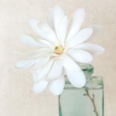 He encontrado este interesante anuncio de Etsy en https://www.etsy.com/es/listing/74216516/flower-photography-magnolia-flower