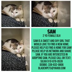 URGENT! Meet Sam, an adoptable Domestic Short Hair looking for a forever home. Sam is a pretty 2 yr old white and grey kitty who wants to be someone's kitty. Please don't leave her here, The shelter is full NO ROOM,,we Must SAVE these fine kitties!!! Bladen County Animal Shelter 910-876-0539 506 Smith Circle Elizabethown, NC 28337