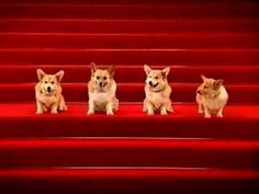 The Barking Birthday song for corgi or dog lovers (and anyone who chuckles when the Jingle Bells Dogs song plays): This will delight you. Honestly, it's amazing whoever trained these dogs to bark on cue.