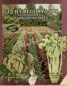 seeds_catalogs-02358 006-Field, lettuce, celery  botanical floral botany natural naturalist nature flowers flower beautiful nice flora plants blooming ArtsCult.com Artscult ArtsCult vintage printable public domain 300 dpi commercial use 1800s 1700s 1900s Victorian Edwardian art clipart royalty free digital download picture collection pack paintings scan high qulity illustration old books pages supplies collage wall decoration ornam #flowersplantsillustration