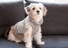 Whether your tail-wagger's hipster, sporty or preppy, we've got you covered.