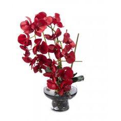 Ferrari Red Orchids