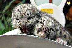 Hey! You're squishing my head!!!