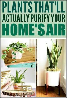 18 Houseplants Most Effective at Cleaning The Air You Breathe At Home!