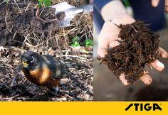 Blijf bloemperken en borders omwoelen bij zacht weer en gebruik compost en verhakselt tuinafval. Door de grond om te halen verminder je de kans op onkruid en kunnen de vogels zich te goed doen aan insecten.