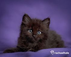 Rachael Hales pic of the day: Nugget, all in purple and black.