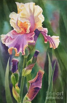 Violet And Orange Iris Painting by Sharon Freeman
