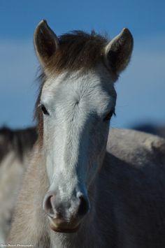 Salt River Wild Horses by Dirty Desert Photography