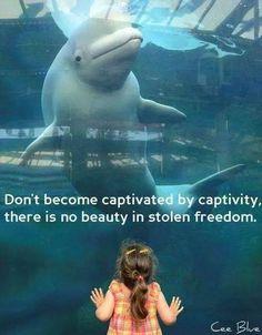 freedom for captive animals