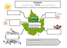 Worksheets Comparing Photosynthesis And Cellular Respiration Worksheet photosynthesis google and charts on pinterest graphic notes to help students master cellular respiration use this as a support for