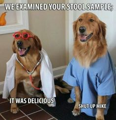 Funny pictures about I Think It's Time To Look For a New Doctor. Oh, and cool pics about I Think It's Time To Look For a New Doctor. Also, I Think It's Time To Look For a New Doctor photos. Funny Dogs, Funny Animals, Cute Animals, Animal Funnies, Dog Funnies, Animal Memes, Animal Captions, Animal Quotes, Baby Animals