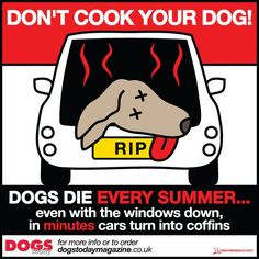 cars are dangerous to dogs!