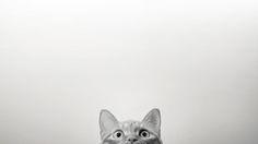 my lovely cat, by Wei Li