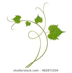 Find Grape Leaves stock images in HD and millions of other royalty-free stock photos, illustrations and vectors in the Shutterstock collection. Vine Drawing, Leaf Drawing, Plaster Crafts, Leaf Border, Vine Leaves, Fruit Art, Border Design, Girls Be Like, Raisin
