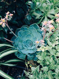 * for more home inspiration, visit www.bellamumma.com